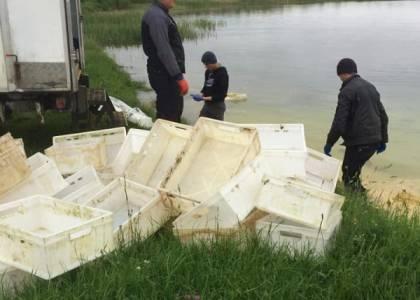 У Яворівський кар'єр на Львівщині скидають рештки свиней з бойні